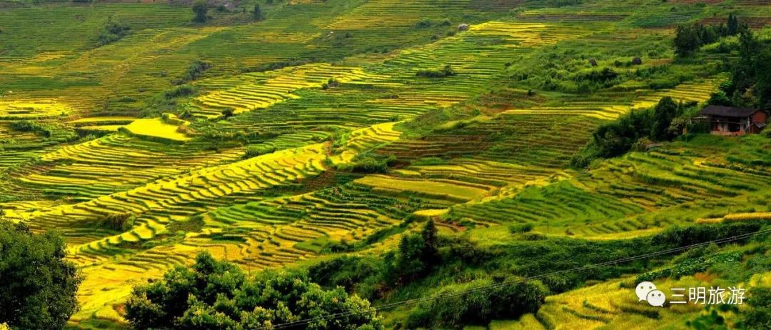 三明也到了她一年之中最美的季节, 将绝大多数的美景包揽, 层叠的梯田