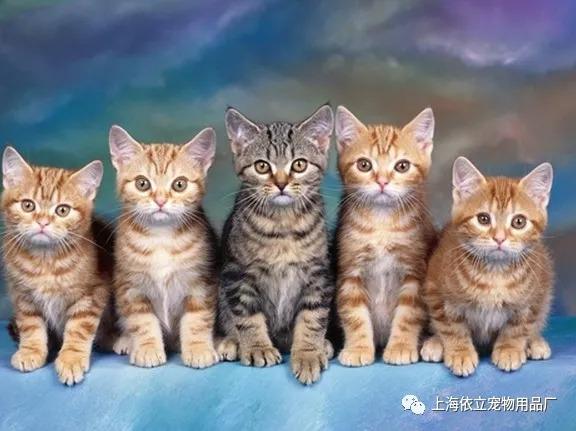 猫咪体内寄生虫图片图片