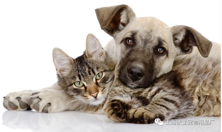 猫咪体内寄生虫症状图片