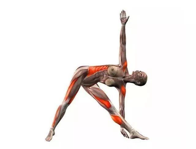 20个瑜伽体式解剖图,告诉你体式该练习哪里图片