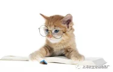 猫咪体内寄生虫图片