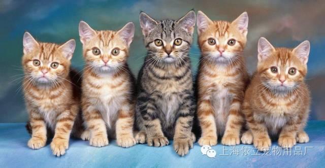 猫咪体外寄生虫对人有害吗图片
