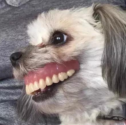 爸爸的假牙找不到了,可無意間看了狗狗一眼後...笑噴了!
