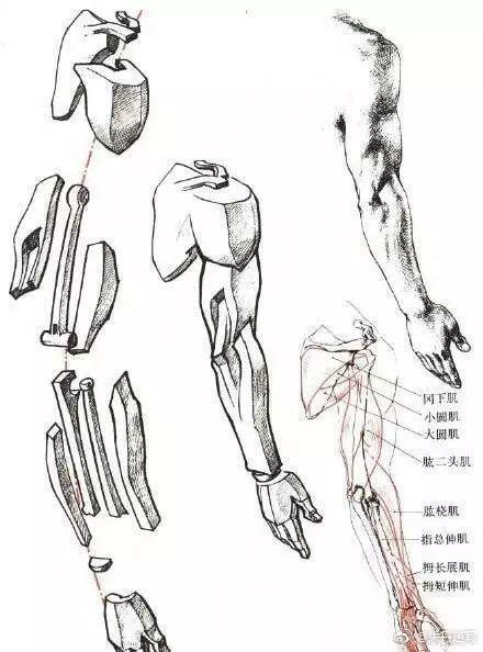 文化 正文  画头部 人物头像的种类: 画衣服 画衣服 如何画手部?