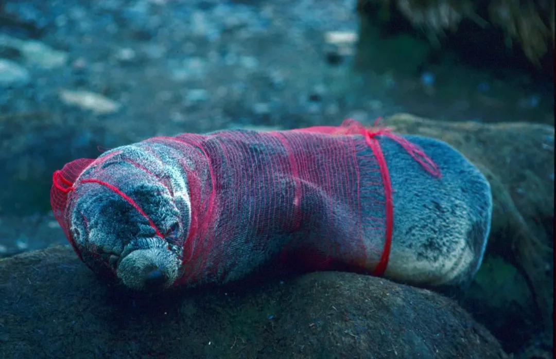 """""""塑料号""""检出海洋生物带回微教程,海洋污染远比你想的额饰蛟龙发簪图片"""