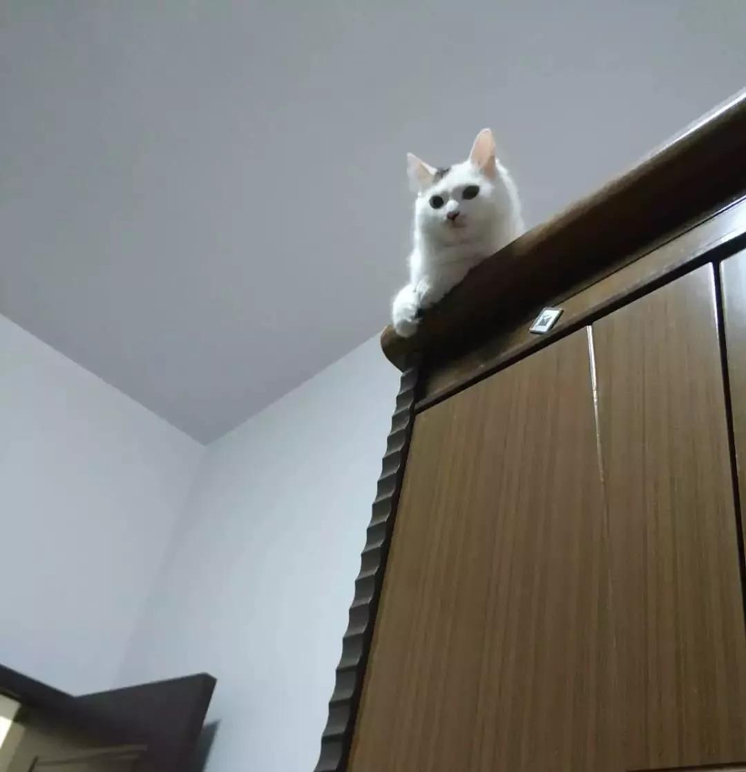 曬貓日 | 喵:低頭看,這都是朕打下的江山!