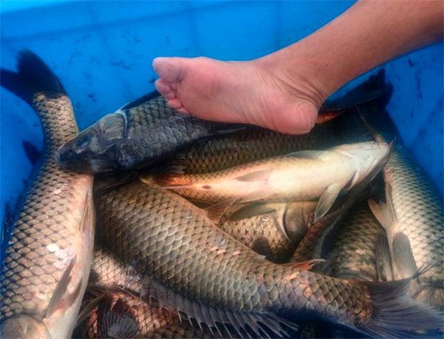 三款诱鱼效果超强的天然小药钓鲤鱼钓鲤鱼小药配方必备