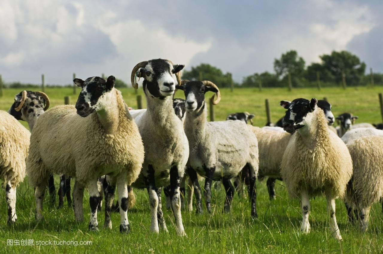羊痘吃什么药,羊痘怎么引起的