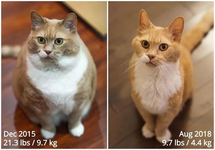 寵物都減肥成功了,而你….