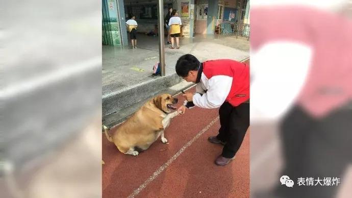 怕猪一样的队�_毕竟在这样的喂养环境下狗都能成猪一样,你还有什么理由去怪猪胖呢.