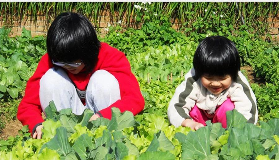 家庭生态农场,规划内容建议