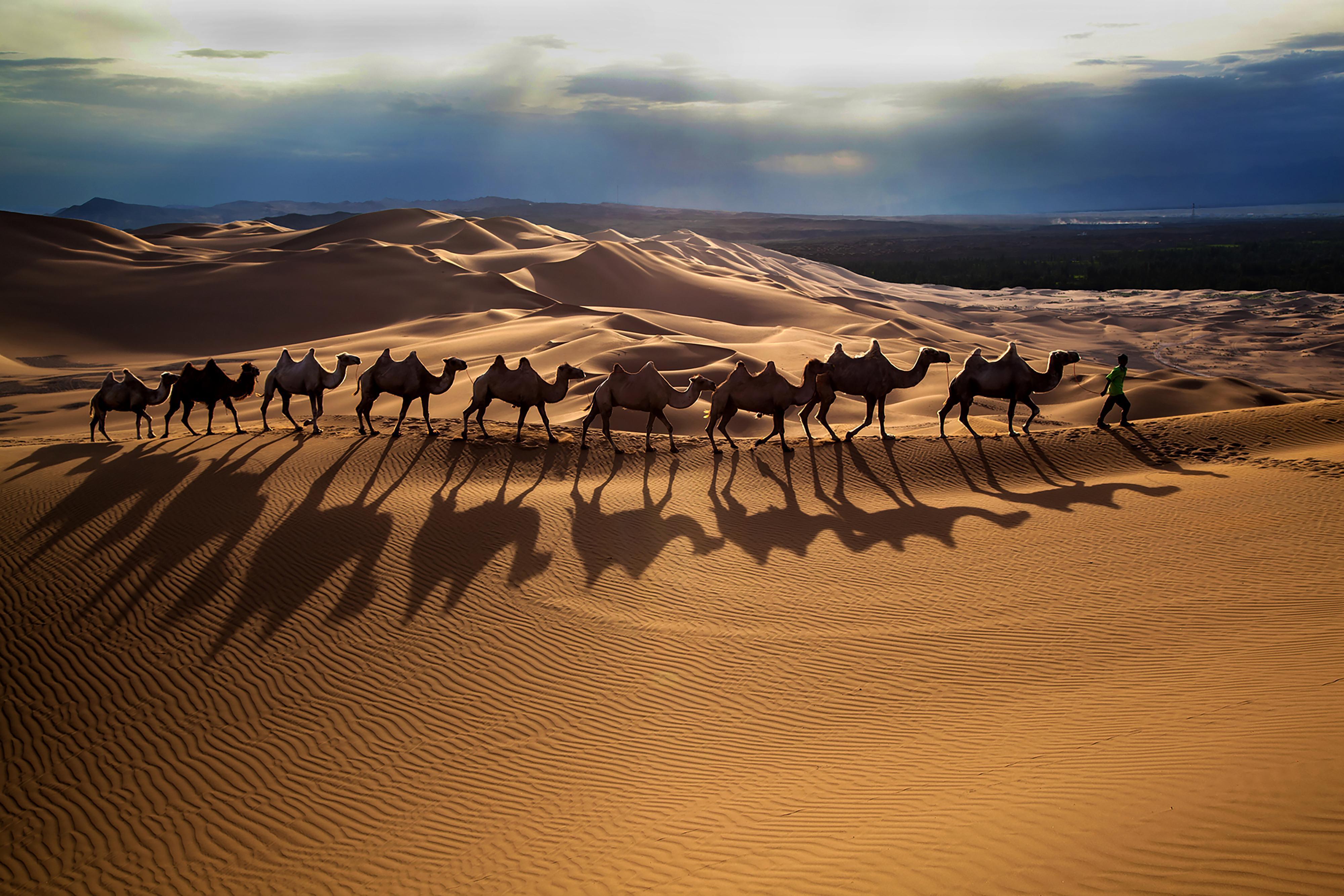 新疆有个神奇的沙漠 千百年来沙漠绿洲人类和谐共处 堪称奇迹