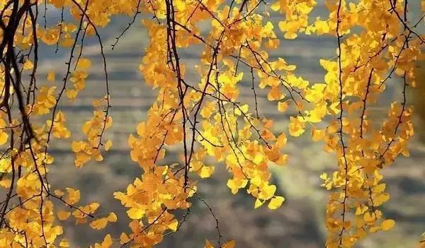【健康知识】如何开启秋季健康养生模式?谨记这四点……