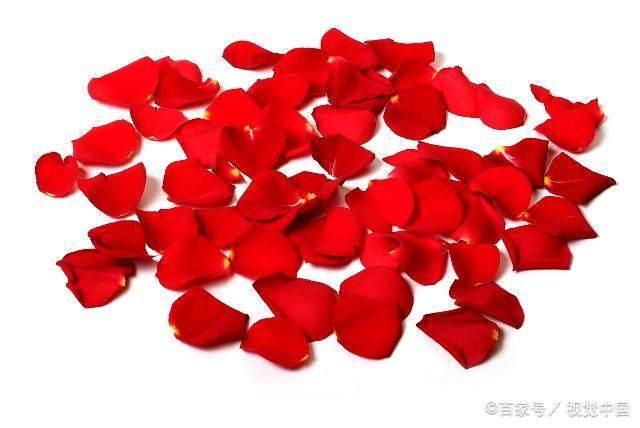 玫瑰的用途玫瑰精油的用法了解一下