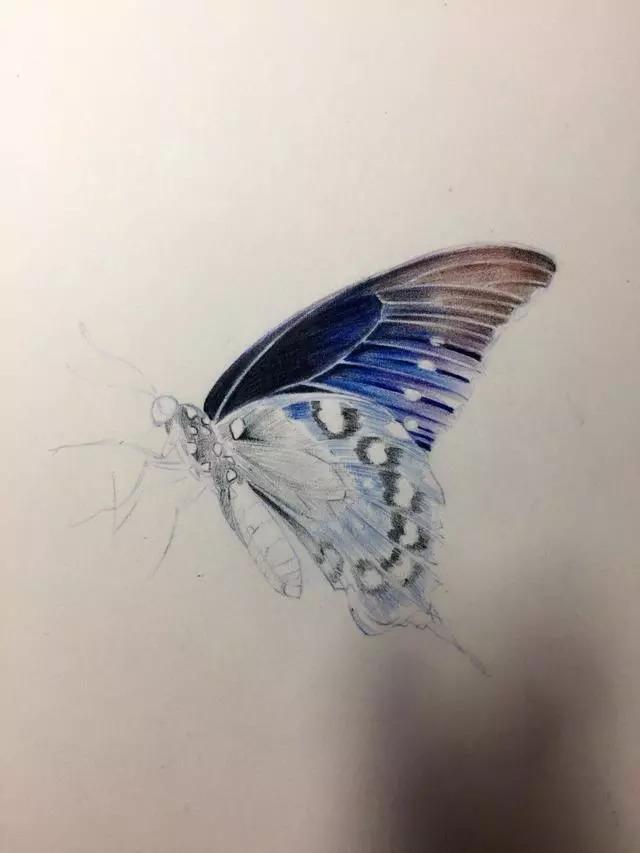 如何用彩铅画一只生动的蝴蝶