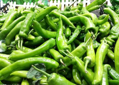 你还在为肥胖苦恼吗?试试青椒加此物,不仅有减肥功效还能去色斑
