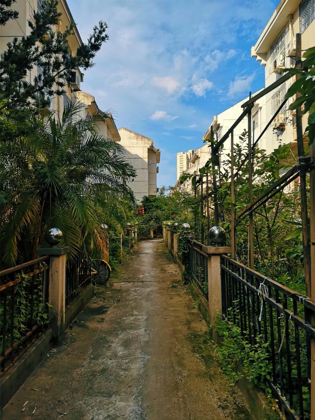 宁德这个别墅,从高冷的别墅群到如今的大门地方美食,原来是因为.社区人气花园图片欣赏图片