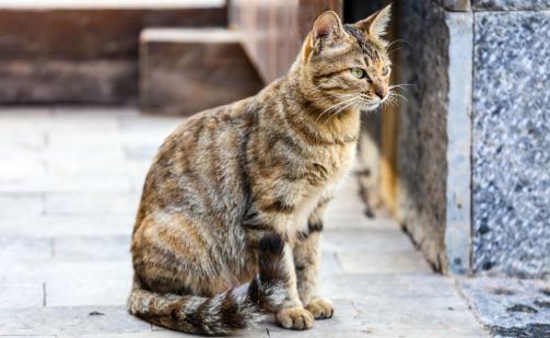 猫咪抓壁虎玩,不料被反咬,疼的嗷嗷叫:快放开我啊
