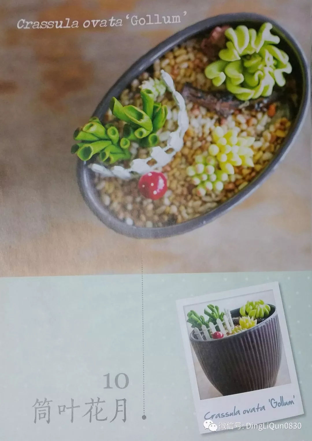 30款多肉植物制作 中文收藏版
