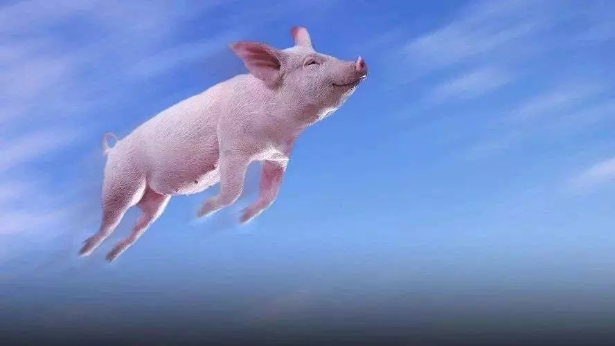 做梦梦见猪解梦说生女孩