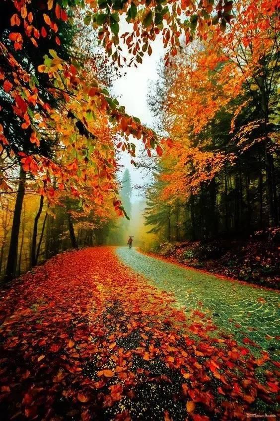 秋天的《小路》这么美,谁伴我同行...