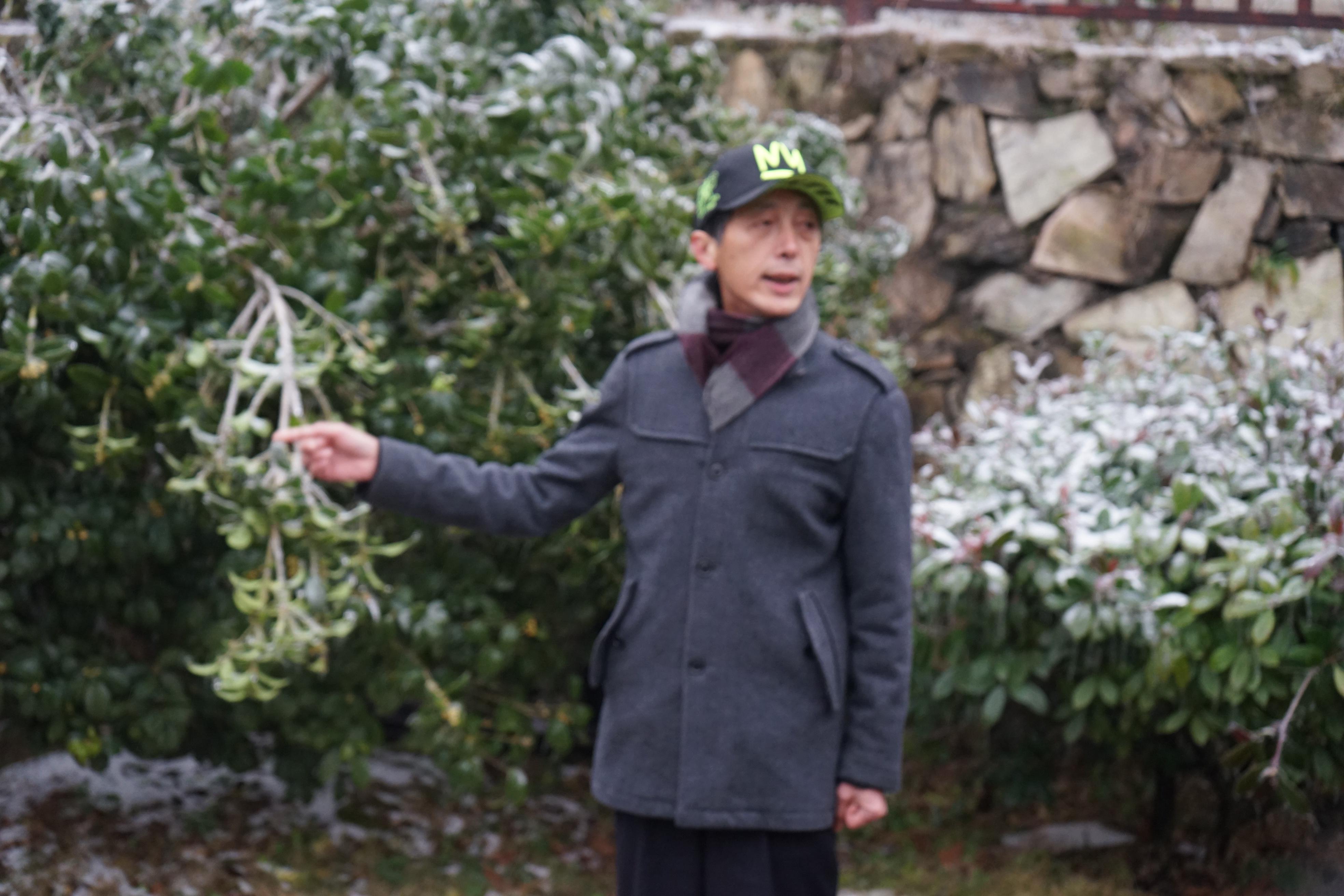 武汉一座茶山,探究虫子不吃茶叶的原因