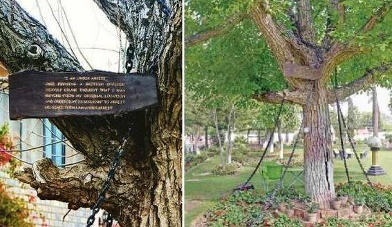 巴基斯坦有棵神樹,被人用鐵索捆綁了120年