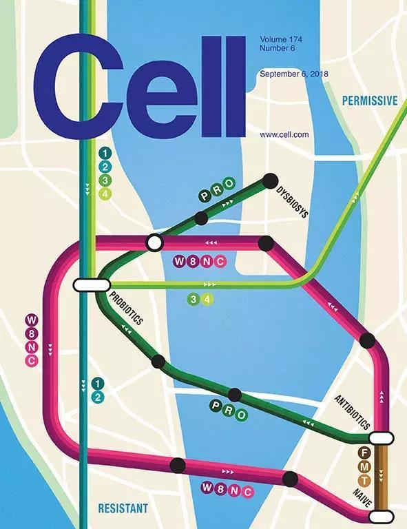 《细胞》:补充益生菌对肠道微生物组影响