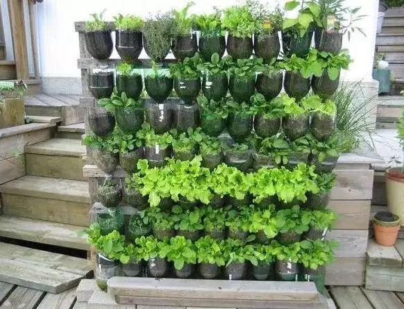 塑料瓶种�9f�x�~j�>�X_捡回来一大堆塑料瓶,养成空中菜园,羡煞旁人