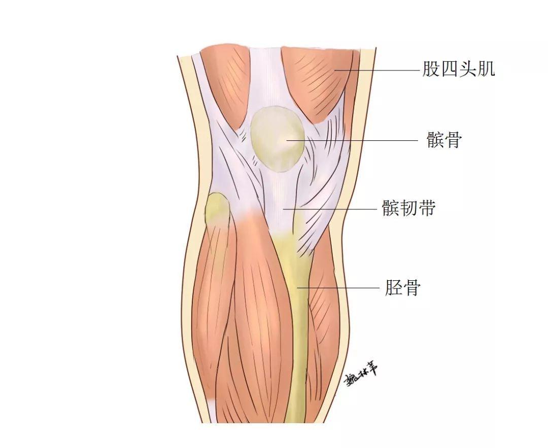 为什么阴雨天膝关节会痛?|首届骨科大夫科普大赛作品展