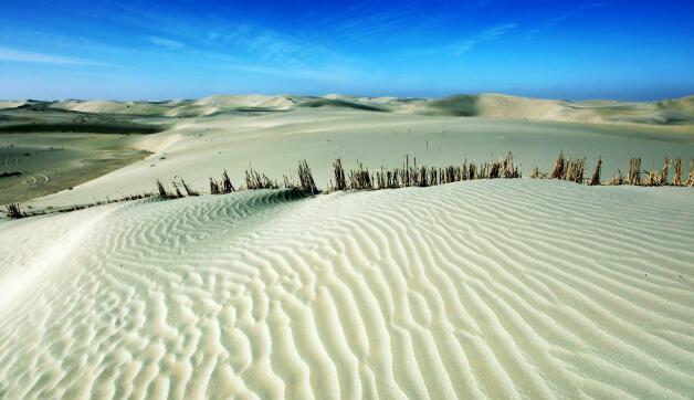 中国塔克拉玛干沙漠,政府投资数亿种下大量植物,结果意想不到