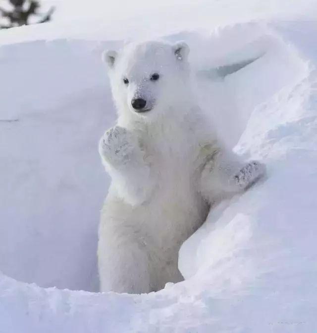 这里有狮子,红枫和北极熊8月20日极光女图片