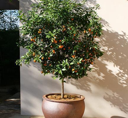 植物花卉,最适合放在新家里 常春藤是目前吸收甲醛最有效的室内植物图片