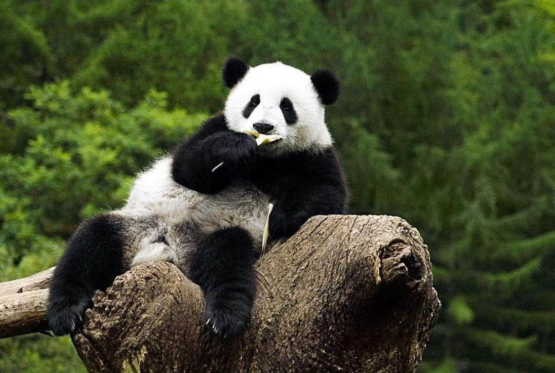 熊猫GM800 - 道客巴巴