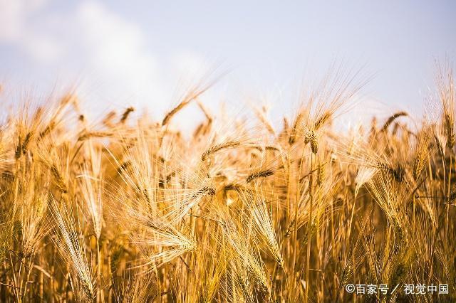 致富窍门:农民种苞谷也能赚钱,你只需要这样做