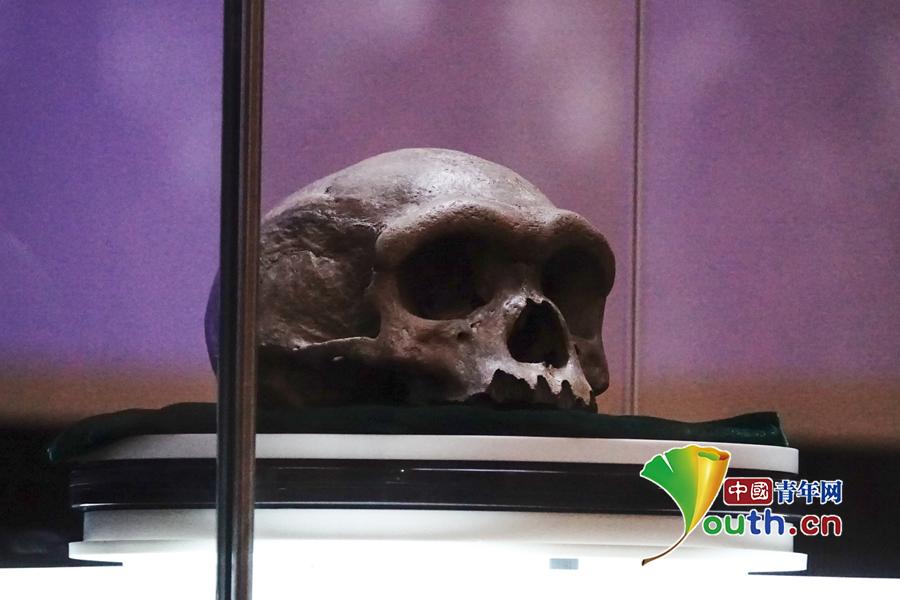 亚洲首个人头颅化石首次展出