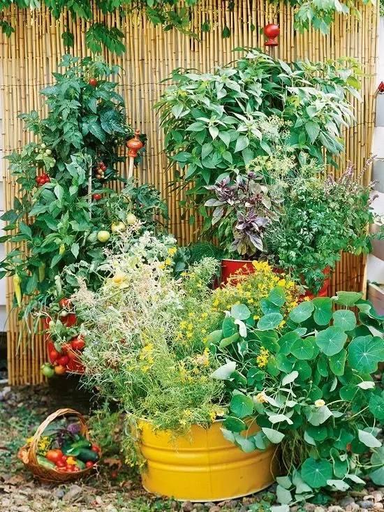如果有个菜园,不养花只种菜,图片