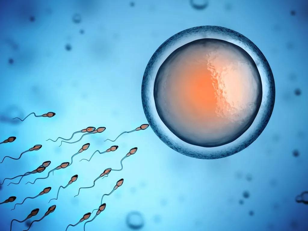 人类精子密度40年下降50%!专家:中国男人没能幸免