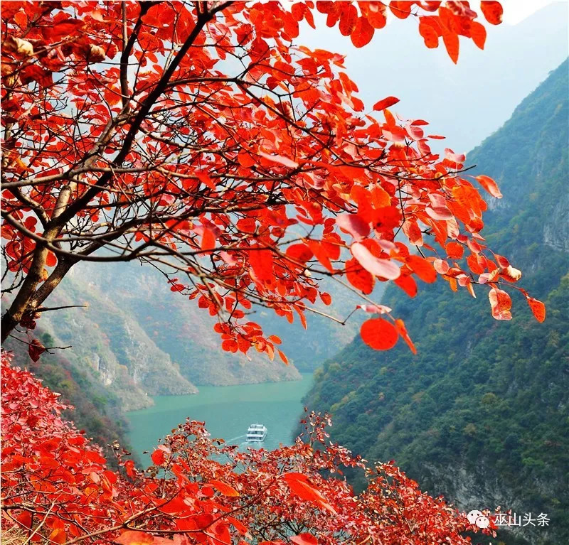 今年红叶节开幕式晚会方案出炉,分为四个篇章……_巫山图片