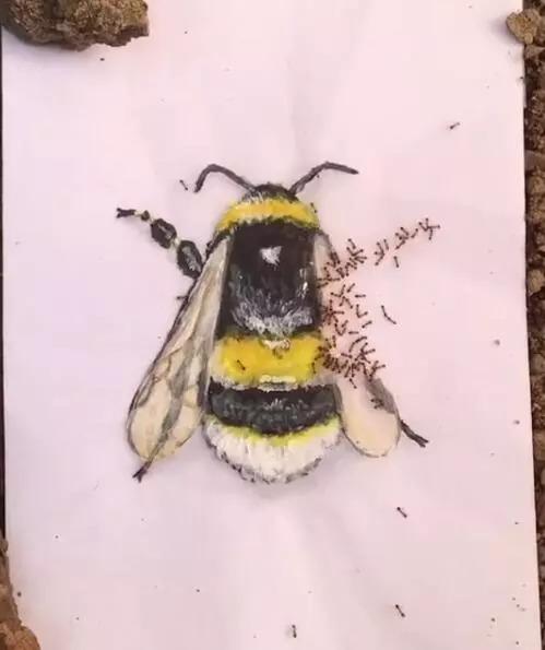 用蚂蚁 绘画 ,只要一点糖,就能画出蚂蚁画