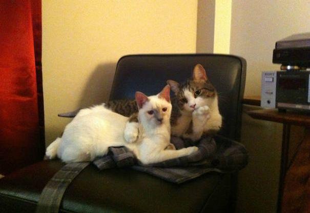猫咪舒服图片