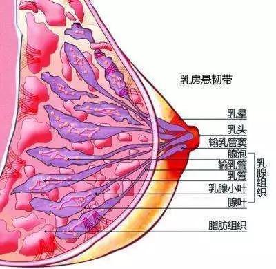 """颖儿坐月子暴瘦94斤变""""经期胸"""",减肥不减胸?减肥可以排骨为什么图片"""