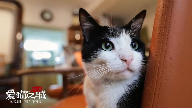 《愛貓之城》終極預告海報雙發 暖心喵喵治愈心靈