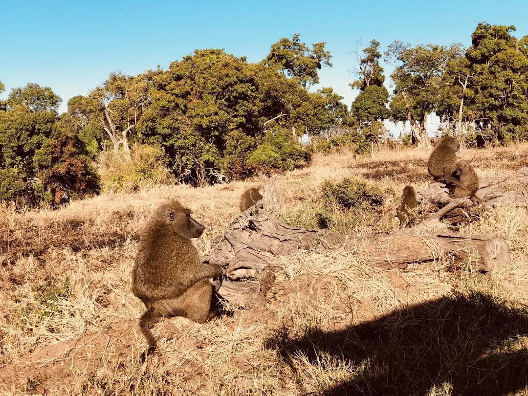 感受非洲大草原的野性之美