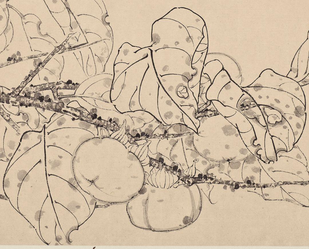 果蔬 果蔬 果蔬 果蔬 果蔬 萝卜 萝卜 水仙 芙蓉 宣草 张铨果蔬白描图图片