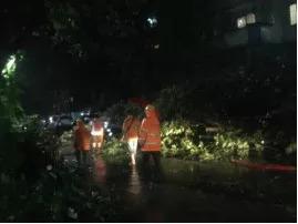 园林人逆风而行的身影,是台风天中最美的风景图片 14223 269x202