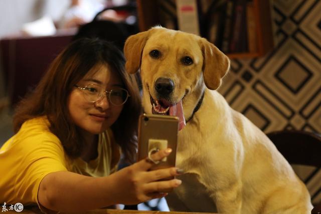 人和狗性交色情片_1/ 12 沈阳出现首家宠物主题餐厅,人和狗可同时就餐,开业以来生意很