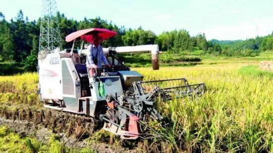 九部门:做好2021年秋粮收购工作 从速从严从重查处拖欠粮款等行为