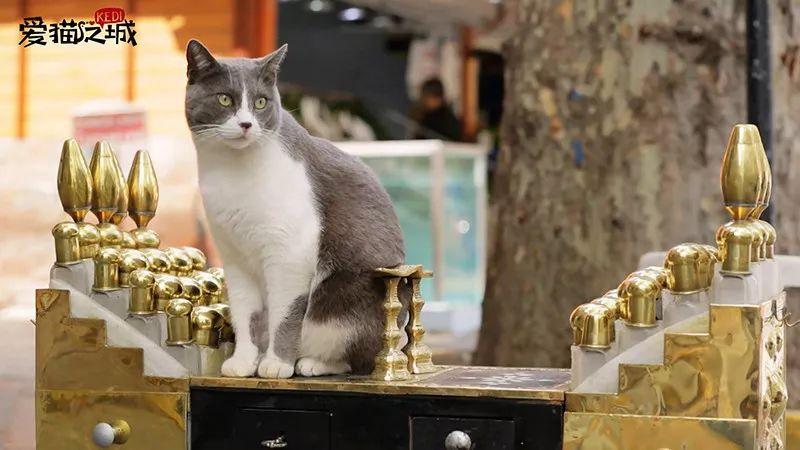 撸电影下载-亚洲_撸猫新玩法!大型聚众撸猫,错过下次就不知道要什么时候了