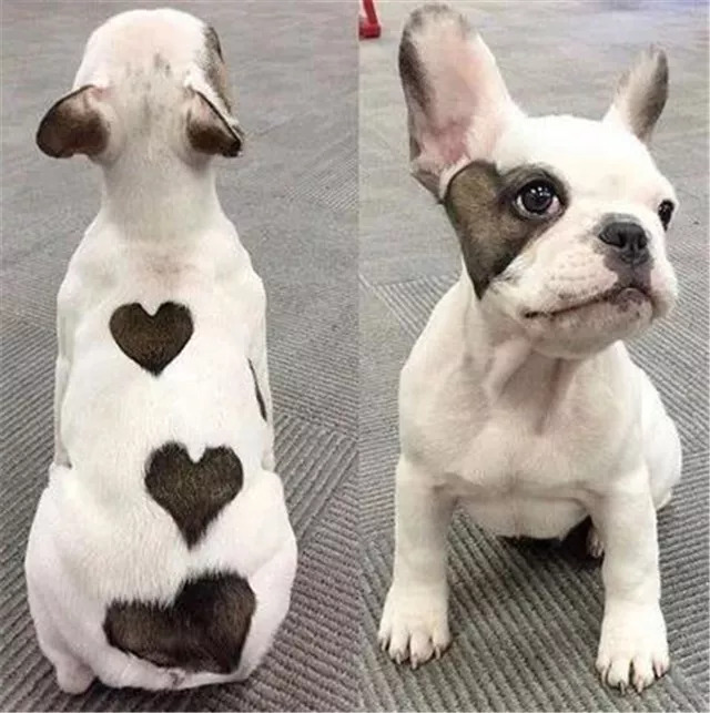 你是不是有别的狗了_做狗呢,最重要的是开心,长相只是浮云